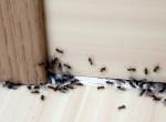 Fantasztikus ötletek, amikkel örökre távol tartod a rovarokat a lakásodtól