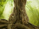 Számodra melyik fa a legszebb? Hallgass a belső hangodra, lelkedről mesél