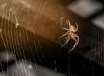 Agyonütötte a férfi a pókot - Mindenki rémálma, ami ezután történt