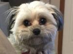 Ezen a kutyán röhög mindenki: Olyat tett, amire soha senki nem számítana