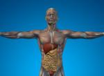 10 titkos funkció az emberi testben, amiről nem tudtál