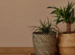 15 növény a lakásban, ami hozzásegít a jóléthez