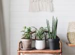 Ezekre figyelj oda: Íme 5 dolog, amit a növényeken lévő elváltozások jeleznek