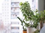 Dobd fel az otthonod növényekkel: Ezek a legszebb zöldek tavasszal