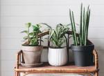 Botanikus útikalauz kezdőknek: Ezekkel a növényekkel lesz sikerélményed