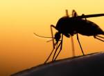 Így kezeld a szúnyogcsípést gyorsan és egyszerűen