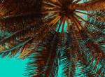 Hallottál már a pálmafa szirupról? Villámgyorsan fogyaszt és még finom is
