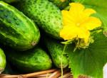 9 csoda étel, amit uborkából készíthetsz: Feltétlenül próbáld ki!