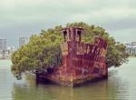 Nincs még egy ilyen a világon: Hajóból nőtt ki egy erdő!