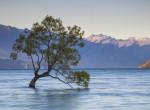 Hihetetlen, mit tettek a vandálok: Ez történt Új-Zéland leghíresebb fájával