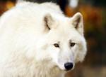 Ősi farkasnak hitték a tetemet, ledöbbentek, mikor rájöttek, mi az valójában