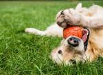 Hogyan lehetsz tudatosabb a kutyáddal? Környezetvédelmi tippek gazdiknak