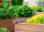 Fűszernövények, amiket otthon is egyszerűen termeszthetsz