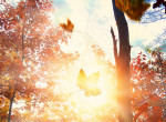 Ekkor köszönt be az ősz az előrejelzés szerint - nem tolódik ki annyira a nyár