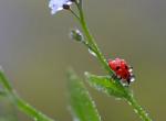 Pókok, bogarak és rovarok: ezeket tilos megölni, eláruljuk, hogy miért