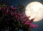 Tudtad? A Hold szabályozza a nőket - Brutális erővel hat testünkre és lelkünkre