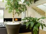 Öt különleges szobanövény, amelyek nincsenek minden szomszédban
