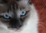 Így befolyásolja a macska az egészségünket – A macskatartás top 5 jótékony hatása