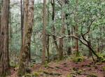 Erről a helyről senki nem tér vissza élve: Aokigahara, az öngyilkosok erdeje