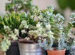 Szeretnél meggazdagodni? Ezek a növények csak úgy vonzzák a szerencsét