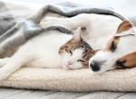 A háziállatokra is veszélyt jelent a koronavírus brit mutációja
