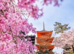 1200 éve nem virágzott ilyen korán a japán cseresznyevirág, és ez semmi jót nem jelent