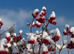 Bekeményített az időjárás: leesett az első hó hazánkban – Videó