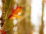 Bekeményít az ősz, fogcsikorgató hideg jön a hétvégén