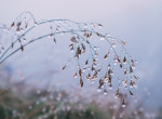 Újabb hidegfront, hajnali fagyok és erős szél  - időjárás-előrejelzés vasárnapig