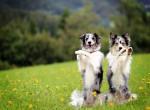A leglátványosabb trükkök, amiket kezdőként is megtaníthatsz a kutyádnak