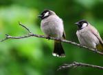 Már világszerte elérhető a természetrajongók új kedvenc alkalmazása