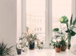 Tamponnal gondozza növényeit a nő, az eredménytől leesik az állad