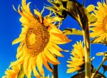 A hőség mellett egy másik veszélyre is figyelmeztet kedden a Meteorológiai Szolgálat