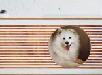 Minek egy kutyának okosotthon? - interjú Ulmann István designerrel