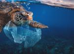 """""""Percenként 1 millió fogy világszerte"""" - Ezeket a fotókat látva te is lemondasz a műanyag zacskókról"""
