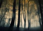 Elveszett a sötét erdőben, napokig farkasok és medvék közt élt az egyéves kislány