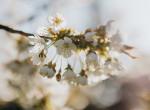 Hidegfront zavar bele a tavaszi felmelegedésbe