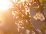 Április utolsó napjaiban is változékony lesz az időjárás – heti előrejelzés