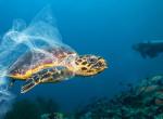 """""""Nem nézhetem, hogy a teknős orrában van a szívószál"""" - Miért gondol mást négy generáció a fenntarthatóságról?"""