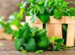 6 gyógynövény, ami felfalja a zsírt