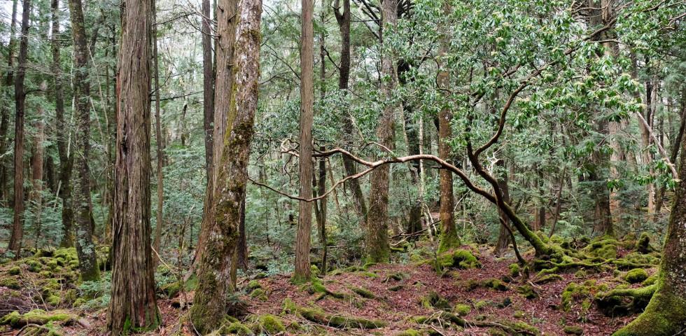 Egy hely, ahonnan senki nem tér vissza élve: Aokigahara, az öngyilkosok erdeje