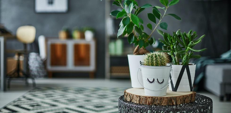 5 növény, ami tökéletesen bírja a fürdőszobai környezetet