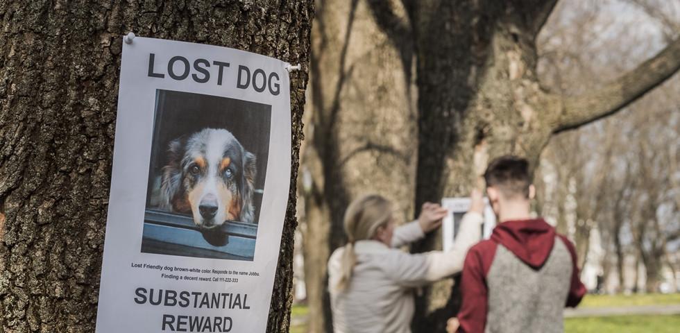 Regénybe illő ennek a nőnek és kutyájának a sorsa