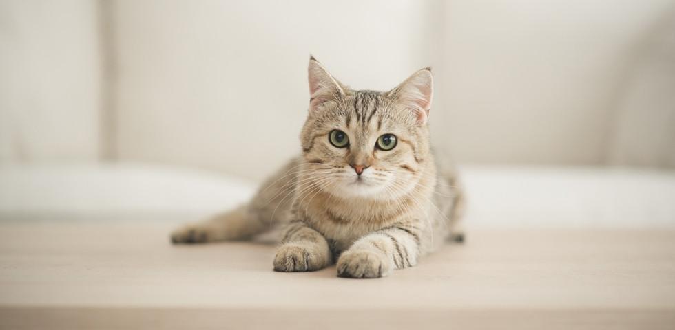Vajon a macskákra is veszélyes a koronavírus? Meglepő választ adtak a tudósok